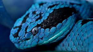 coiled snake blue